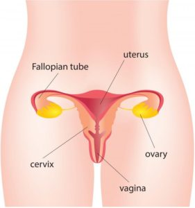ivf for blocked fallopian tubes | Andrology corner