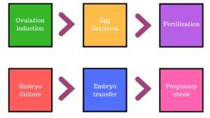 IVF process step by step