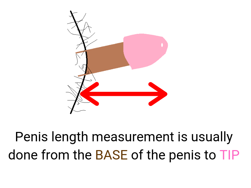 Iphone app designed to let men compare penis size with the rest of the world released in app store