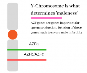 male infertility causes due to Y-chromosome micro-deletion